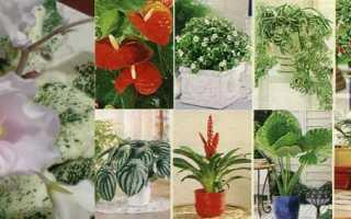 Почему комнатные растения самые нужные для семьи?